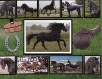 ZSold Memory Photo Album: Horse Friesian SOLD