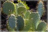 Photographer In The Lens, Bill Birkemeier: Note Card Sedona, Prickly Pear Cactus Color