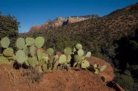Photographer In The Lens, Bill Birkemeier: Art Print Sedona, Prickly Pear Cactus Color