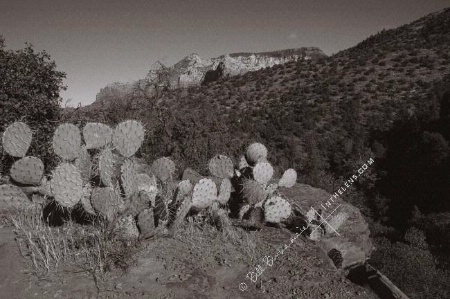 Photographer In The Lens, Bill Birkemeier: Art Print Sedona, Prickly Pear Cactus B&W