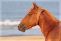 Photographer In The Lens, Bill Birkemeier: Note Card Wild Mustang Stallion Profile Beach Color