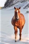 Photographer In The Lens, Bill Birkemeier: Note Card Wild Mustang Stallion Beach Color