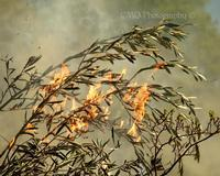 Art Photographer Cindy Quigley: N Flaming Olive Past Featured Artist